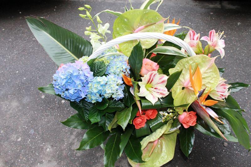 CF 10-500,00 Ron-Cos cu hortensie, anthurium, orhidee dendrobium, strelizia si minirosa